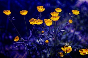 Çiçekler-1, Sarı Çiçekler, HD Doğa Manzaraları Floral Canvas Tablo