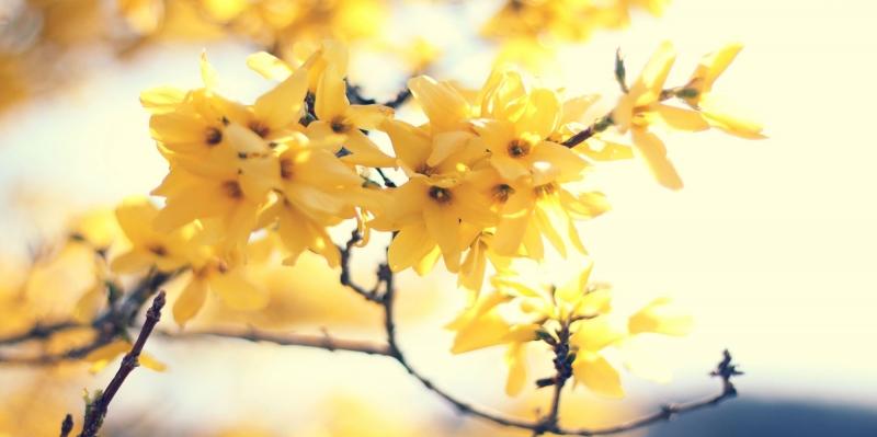 Çiçekler-2, Sarı Çiçekler, HD Doğa Manzaraları Floral Canvas Tablo