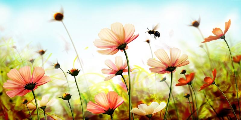 Çiçekler-3, Kırmızı Çiçekler, HD Doğa Manzaraları Floral Canvas Tablo