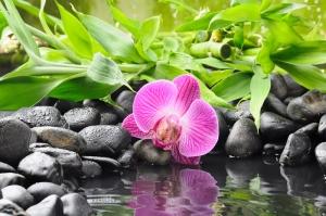 Çiçekler-5, Orkide, Mor Çiçekler, HD Doğa Manzaraları Floral Canvas Tablo