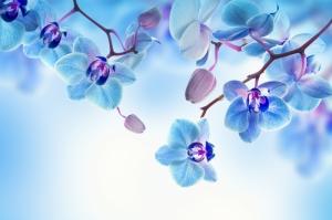 Çiçekler-7, Orkide, Mavi Çiçekler, HD Doğa Manzaraları Floral Canvas Tablo