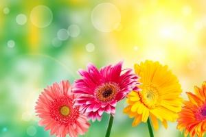 Çiçekler Floral Sanat Kanvas Tablo