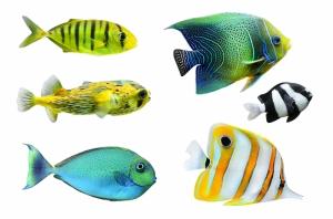 Ciklit Balıkları 2 Hayvanlar Kanvas Tablo