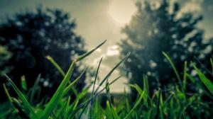 Çimen Doğa Manzaraları Kanvas Tablo