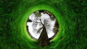 Çimen Doğa Manzarası 360 Panaroma Kanvas Tablo