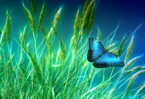 Çimenler ve Kelebek Doğa Manzaraları Kanvas Tablo