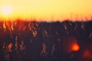 Çimler Gün Batımı Kır Çiçekleri Mükemmel HD Doğa Manzaraları Kanvas Tablo