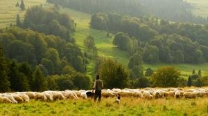 Çoban Fotoğraf Kanvas Tablo
