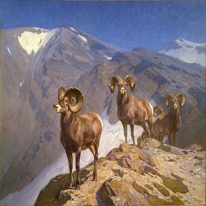 Dağ Keçileri-1 Hayvanlar Modern Sanat Kanvas Tablo