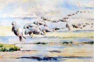 Deniz Aslanları Göcü Sulu Boya Sanat Kanvas Tablo