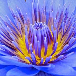 Deniz Çiçeği Doğa Manzaraları Kanvas Tablo