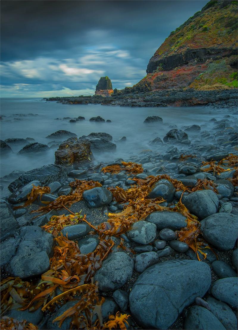 Deniz Kenarı ve Kurumuş Yosunlar Doğa Manzaraları Kanvas Tablo
