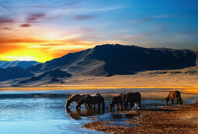 Deniz Kenarında Su İçen Atlar Hayvanlar Kanvas Tablo