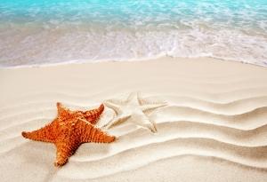 Deniz Yıldızı Doğa Manzaraları Kanvas Tablo