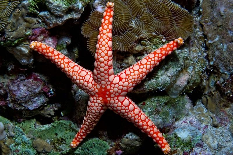 Deniz Yıldızı Endonezya Doğa Manzaraları Kanvas Tablo