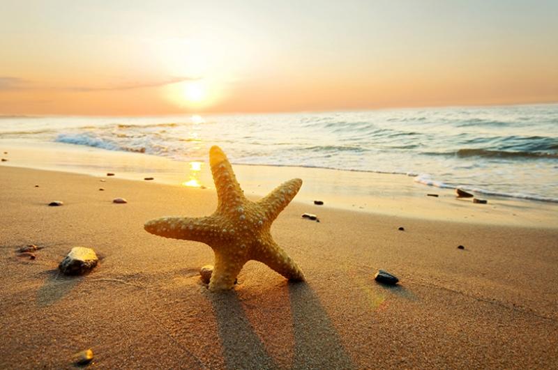 Deniz Yıldızı ve Gün Batımı Doğa Manzaraları Kanvas Tablo
