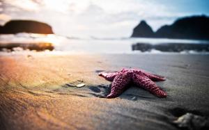 Deniz Yıldızı ve Manzara Kanvas Tablo