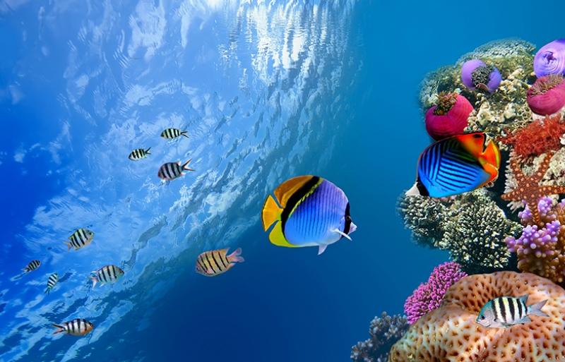 Denizaltı Renkli Balıklar Hayvanlar Kanvas Tablo