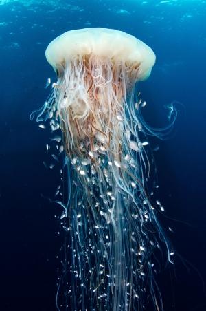 Dev Deniz Anası Hayvanlar Kanvas Tablo