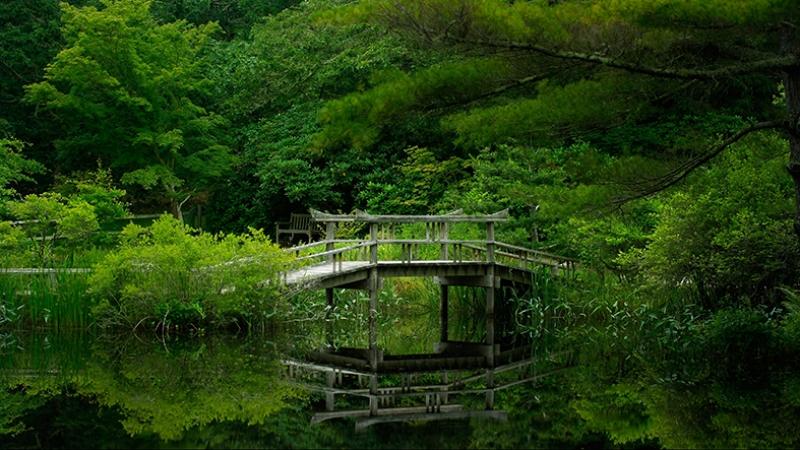 Doğa İçinde Tahta Köprü Doğa Manzaraları Kanvas Tablo