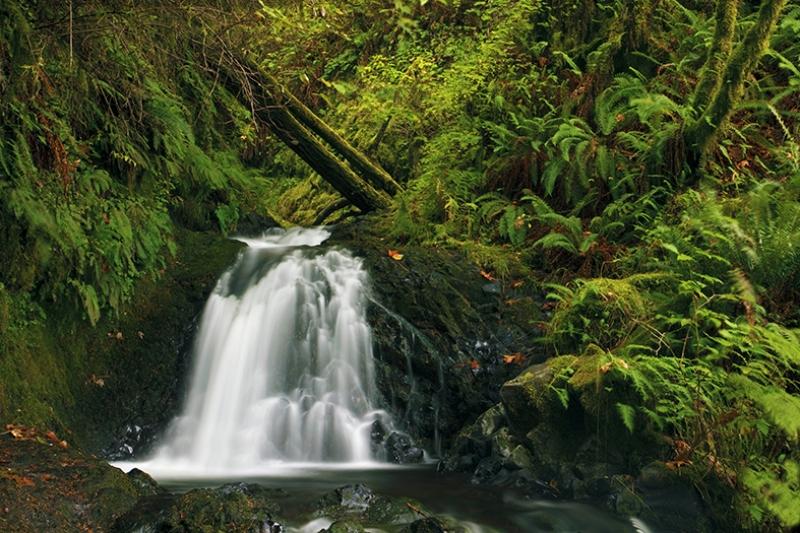 Doğa, Şelale ve Yeşil Manzara Kanvas Tablo