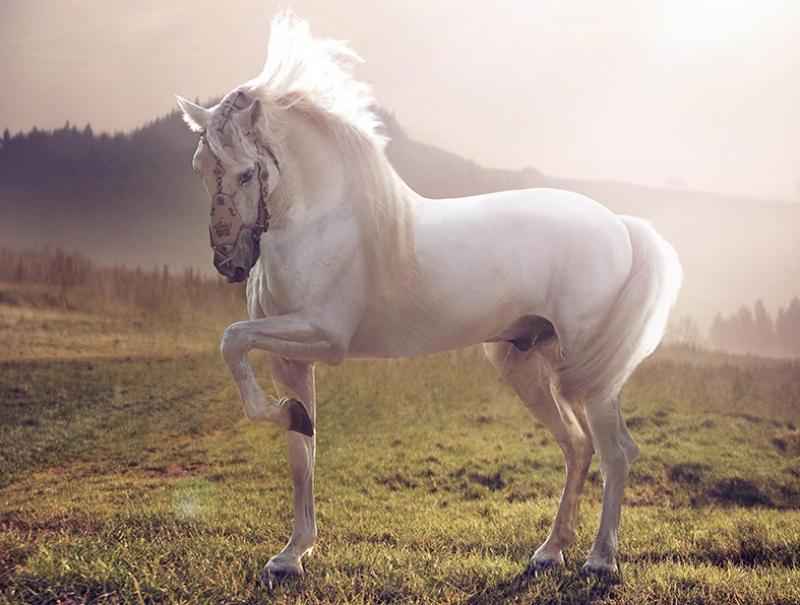 Doğa ve Beyaz At Hayvanlar Kanvas Tablo