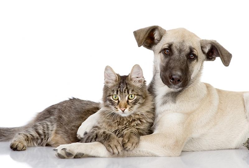 Dost Kedi ve Köpek Hayvanlar Kanvas Tablo