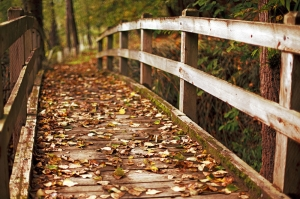 Eski Ahşap Tahta Köprü ve Sonbahar Manzaralı Kanvas Tablo
