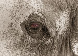 Fil Hayvanlar Kanvas Tablo 2