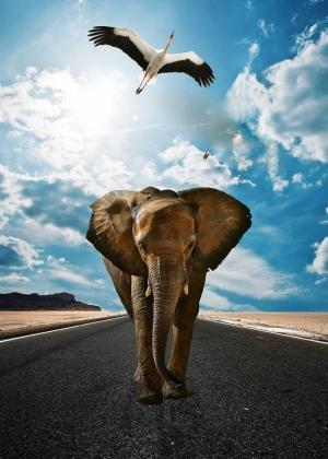 Fil ve Leylek Hayvanlar Kanvas Tablo