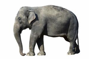 Filler 3 Fil Yavrusu Hayvanlar Kanvas Tablo