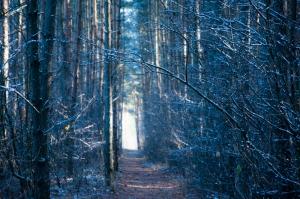 Forest Fotoğraf Kanvas Tablo
