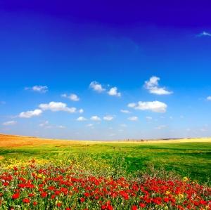 Gelincik Tarlası 3 Doğa Manzaraları Kanvas Tablo