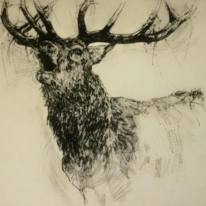 Geyik-39 Hayvanlar Modern Sanat Kanvas Tablo