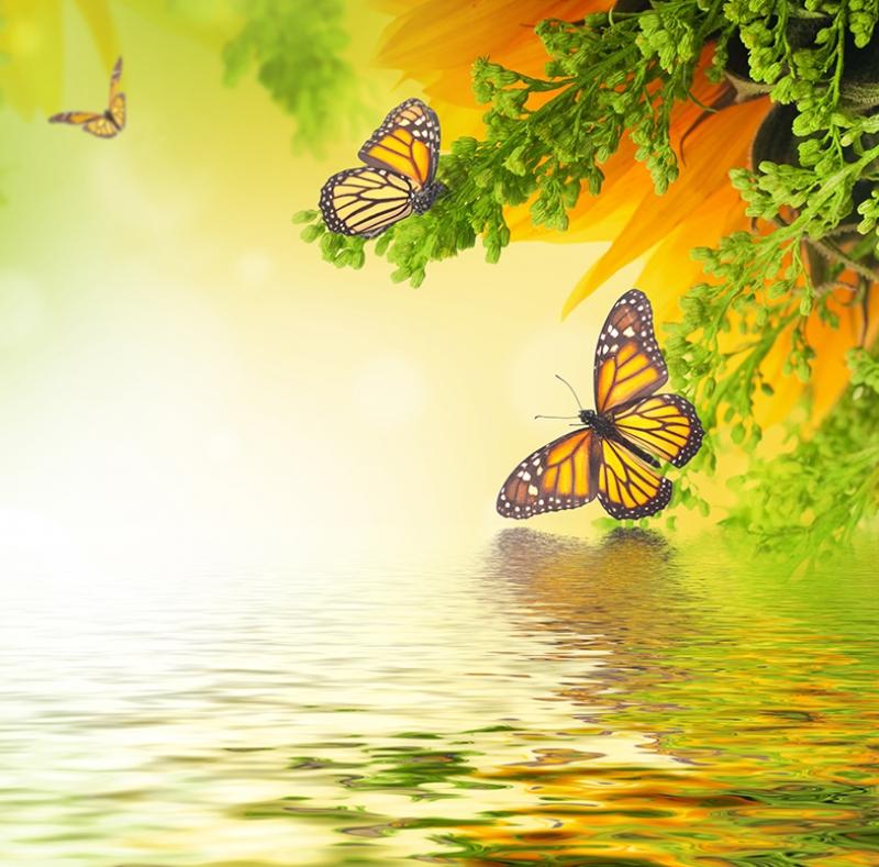 Göl Kenarı ve Kelebekler Doğa Manzaraları Kanvas Tablo