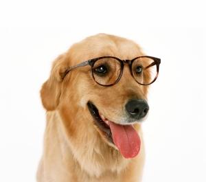 Gözlüklü Komik Köpek Kanvas Tablo