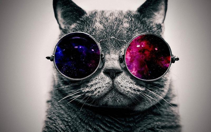 Gözlüklü Sevimli Kedi Mavi Kırmızı Kanvas Tablo