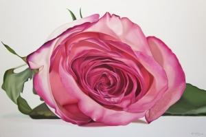 Güller 7 Pembe Kırmızı Beyaz Yağlı Boya Sanat Kanvas Tablo