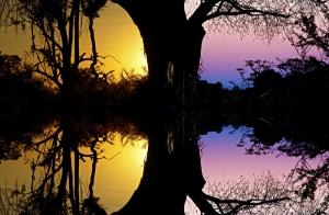 Gün Batımı Ağaç Gölgesi Yansıması Kanvas Tablo