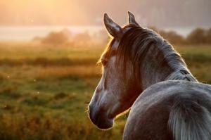Gün Batımı At Hayvanlar Kanvas Tablo