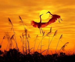 Gün Batımı Sazlık ve Kırlangıçlar Doğa Manzaraları Kanvas Tablo