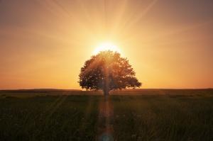 Gün Batımı ve Ağaç Manzarası Kanvas Tablo