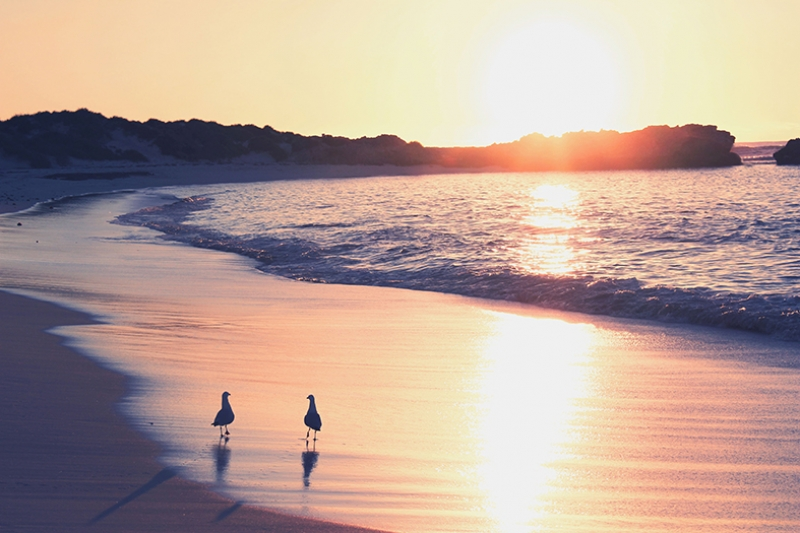 Gün Batımında İki Kuş Doğa Manzaraları Kanvas Tablo