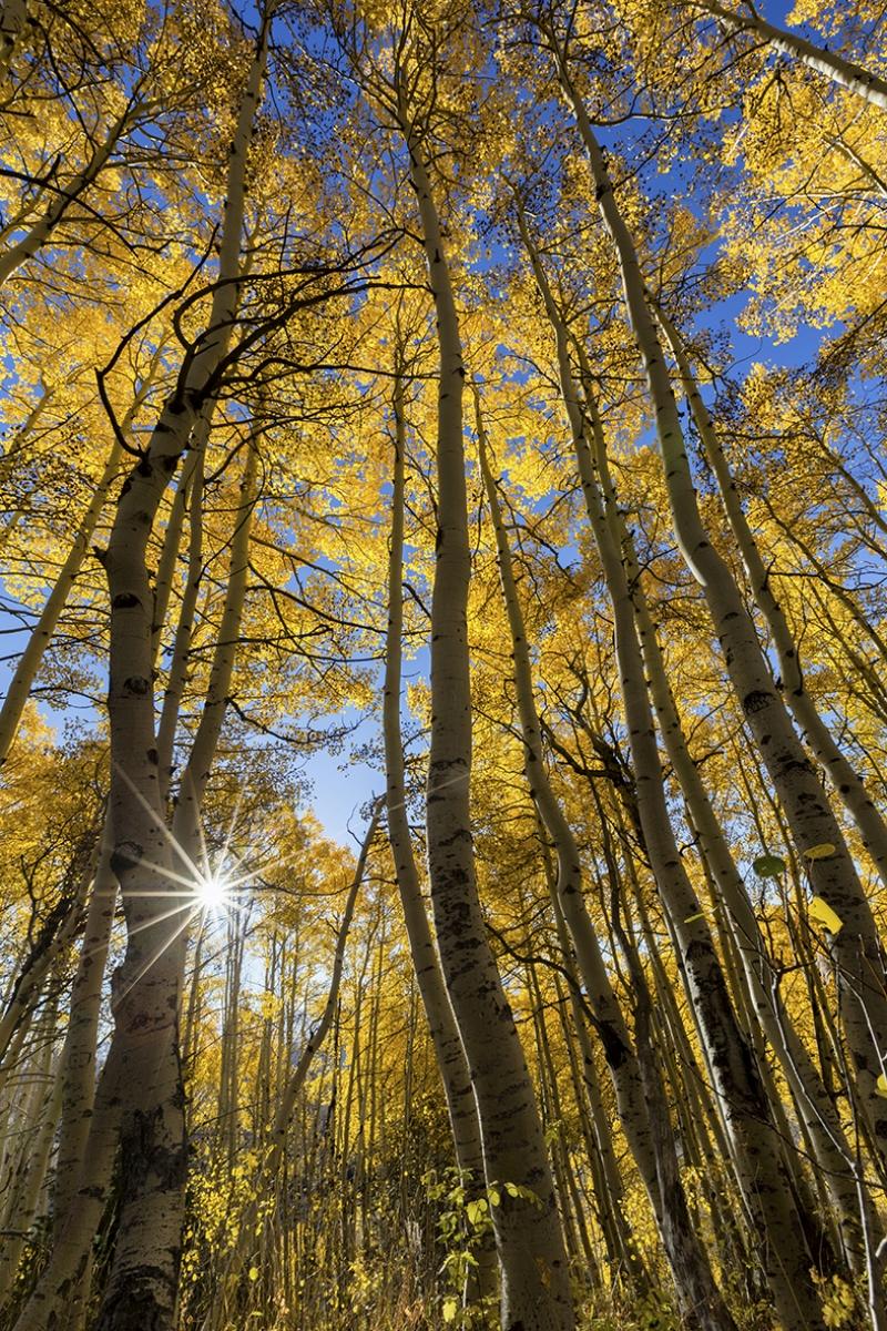 Güneş Işıkları ve Uzun Ağaçlar Doğa Manzaraları Kanvas Tablo