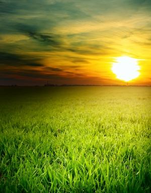 Güneş ve Çimen Manzarası Kanvas Tablo