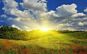 Güneşli Doğa Manzaraları Kanvas Tablo