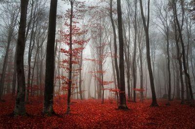 Hazan Sonbahar Dökülen Yapraklar Kırmızı Yapraklar