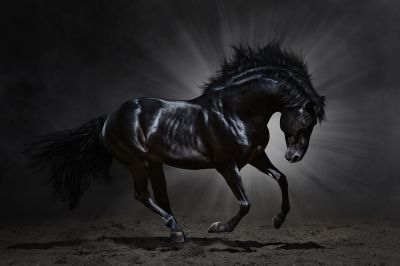 Horse Mane Animals Black Horse Hız