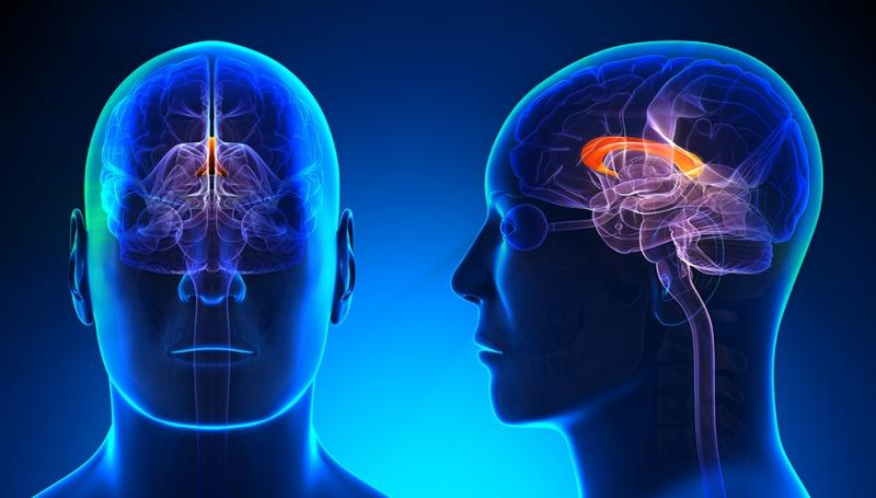 İnsan Beyni Dijital ve Fantastik Kanvas Tablo