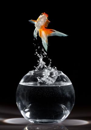 Japon Balıkları 1 Tatlı Su Balıkları Hayvanlar Kanvas Tablo